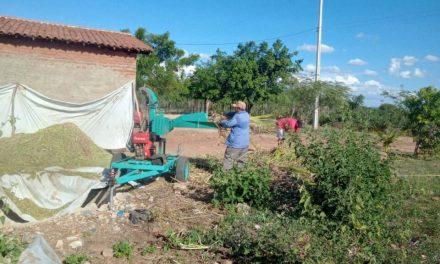 EM OURO VELHO: Prefeitura auxilia produtores na produção de silagem