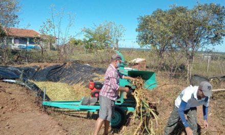 Prefeitura de Ouro Velho auxilia na produção de silagem em pequenas propriedades