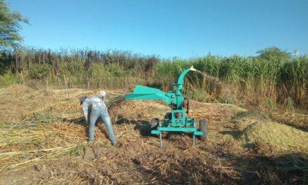 Prefeitura de Ouro Velho continua auxiliando os agricultores na confecção de silagem