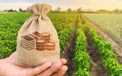 AUXÍLIO AO AGRICULTOR: Prefeitura de Ouro Velho auxilia produção de silagem na comunidade rural do Sanharó