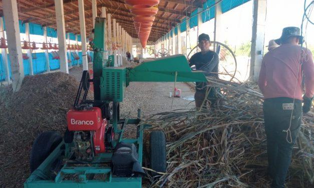 Prefeitura de Ouro Velho auxilia produção de silagem em comunidades rurais